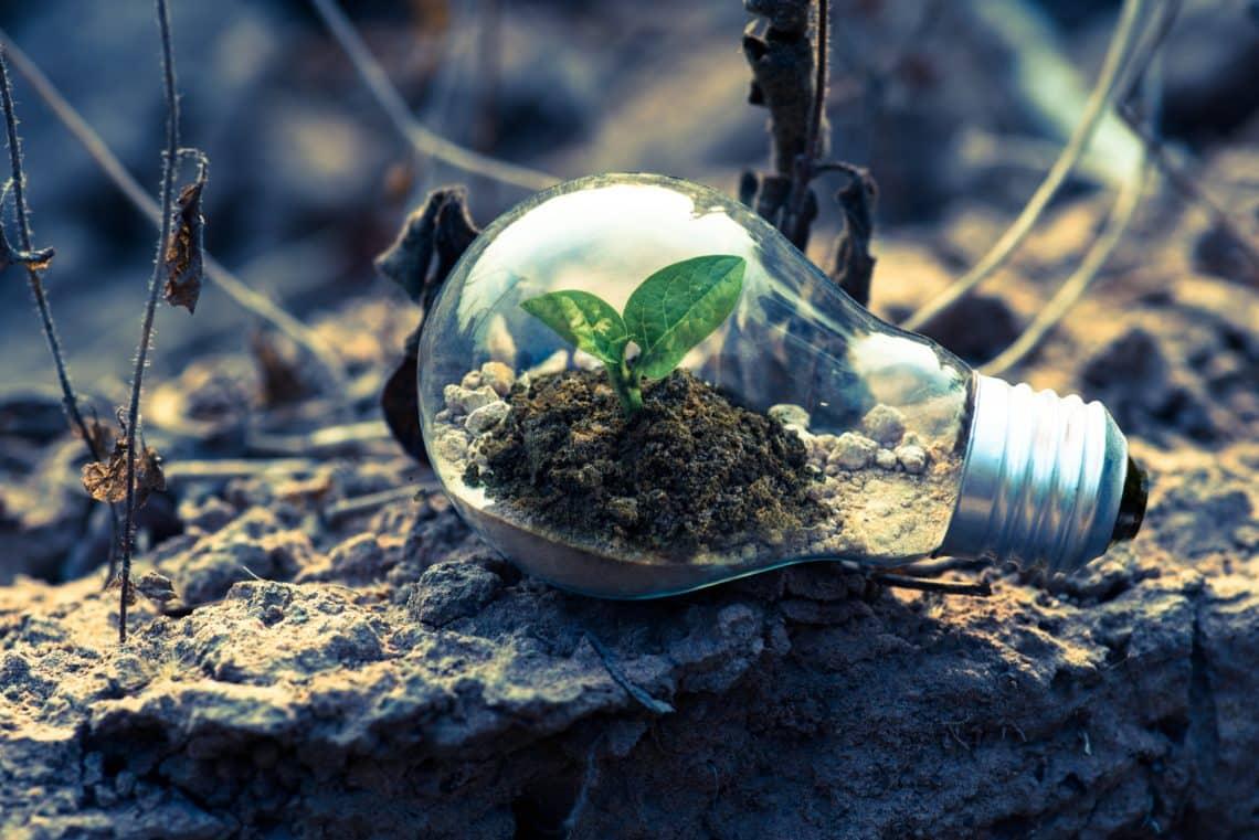 Plante qui pousse dans une ampoule